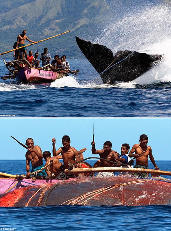 Whalesplit1BM_593x800