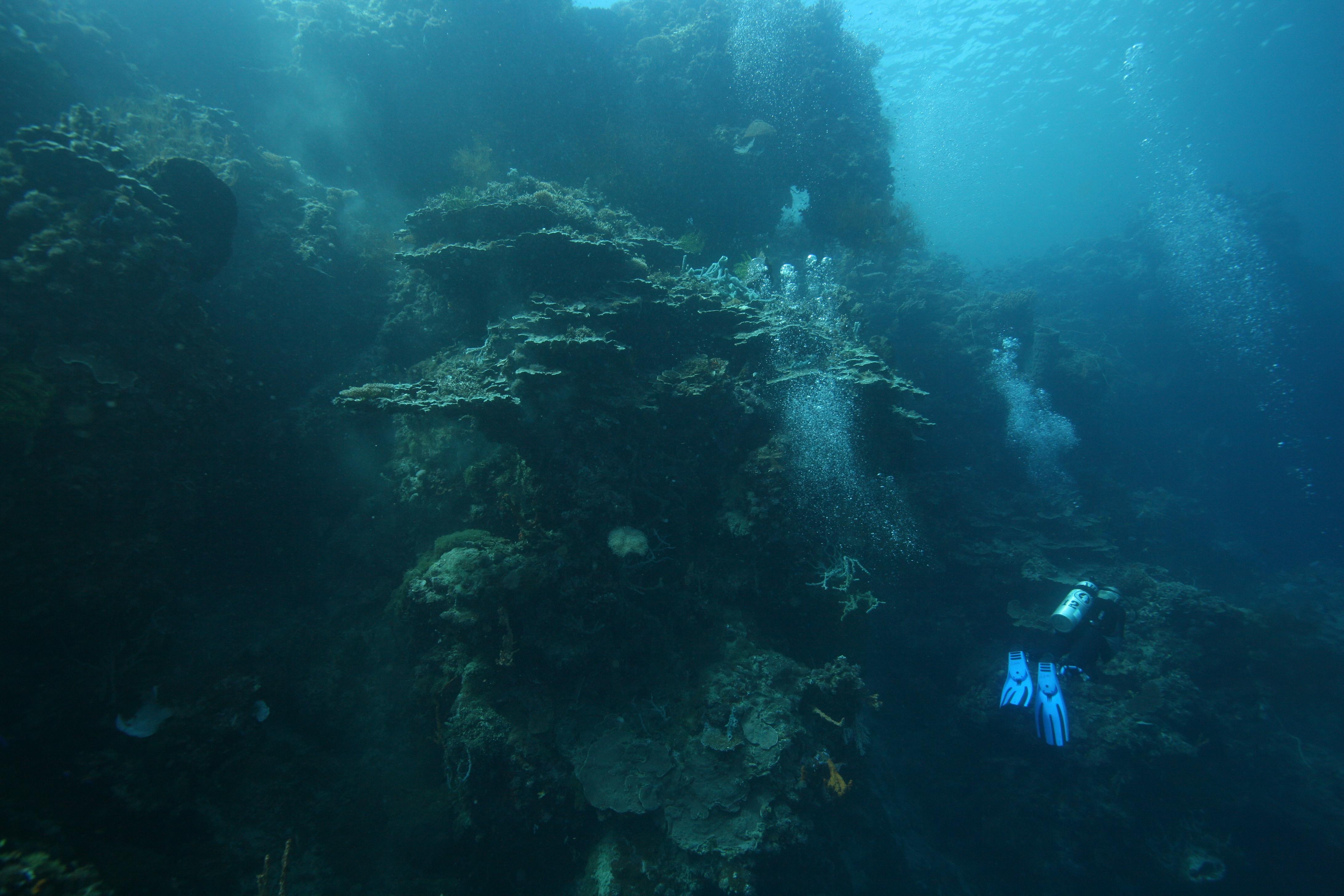 Dive [1990]