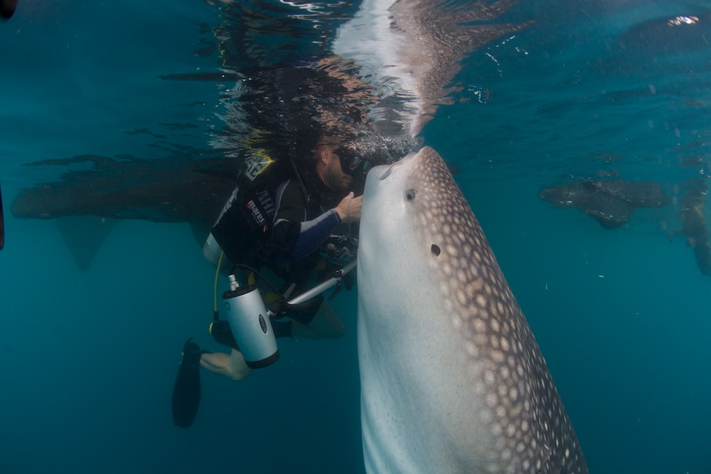 mike and his big pet whale shark scubasigns foundation